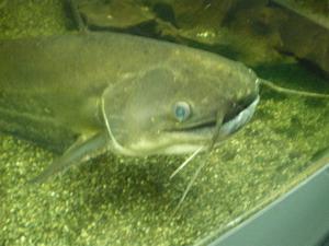 世にも不思議な水族館