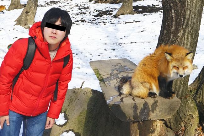 【癒し】冬毛のキツネがモッフモフ!宮城の「キツネ村」が楽園すぎた