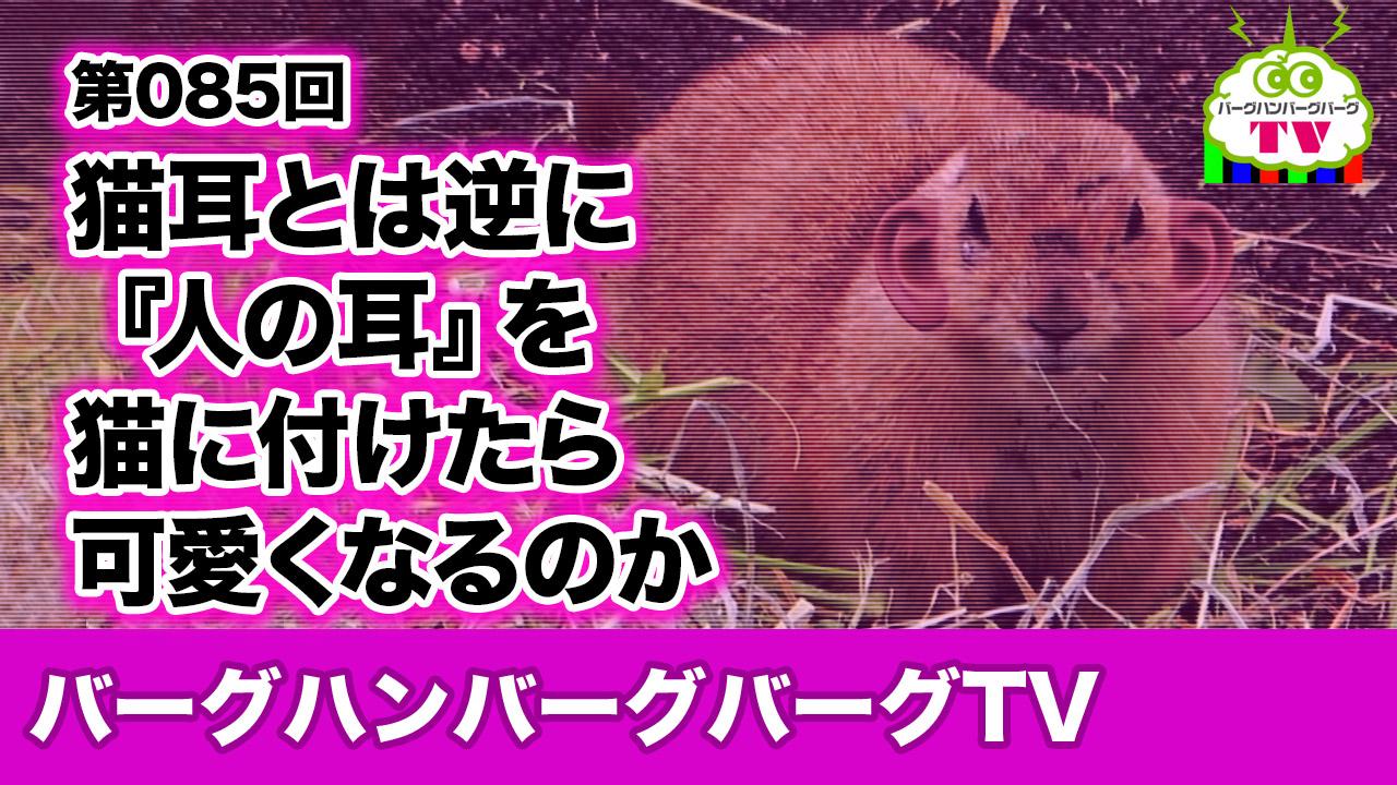【バーグハンバーグバーグTV】猫耳とは逆に『人の耳』を猫に付けたら可愛くなるのか!?
