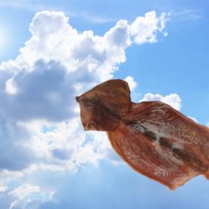 イカは空を飛ぶらしいので実際に飛ばしてみた
